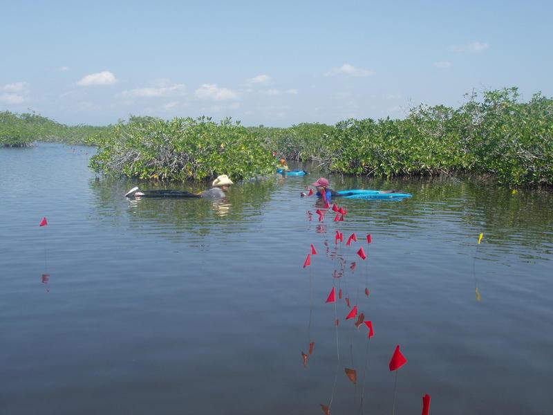 Paynes Creek National Park, Belize.