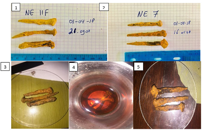 Figure 2: The nails before (#1 & #2), during (#3) and after a desalinization process (#4 & #5).